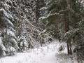 w_lesy